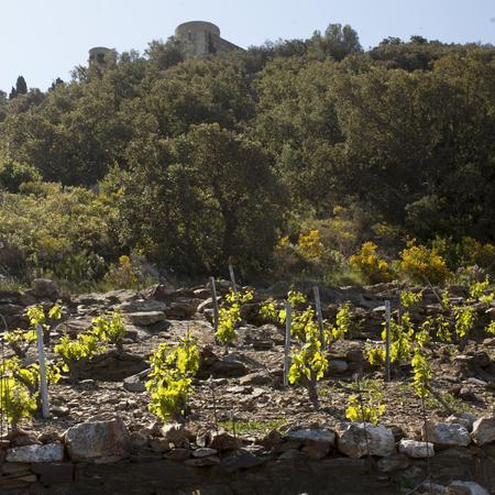 Terre de Schiste, Vignes en terrasse, Terroir et vignoble Collioure Domaine Piétri Géraud